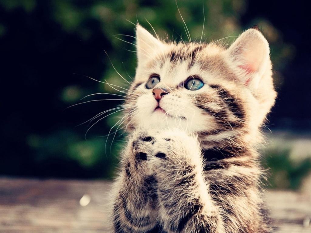 《这只猫很小》英文儿歌歌词